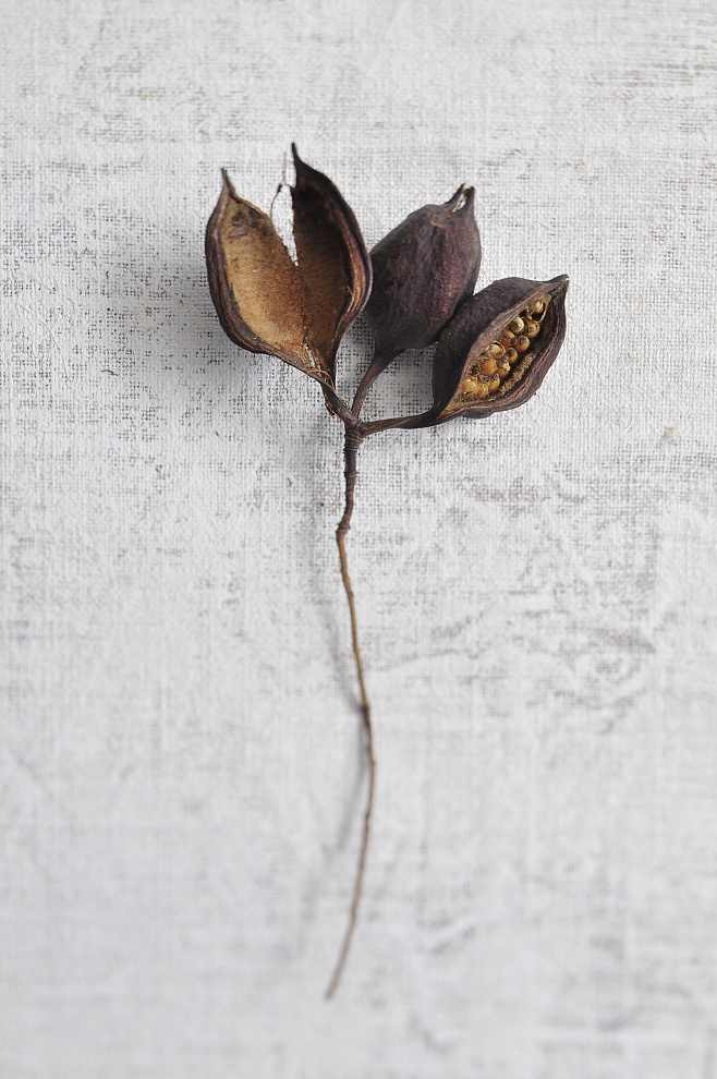 Semi I (Seeds I) - 2011 tiratura variabile 1/7 stampa su Photo Rag BW 100% cotone