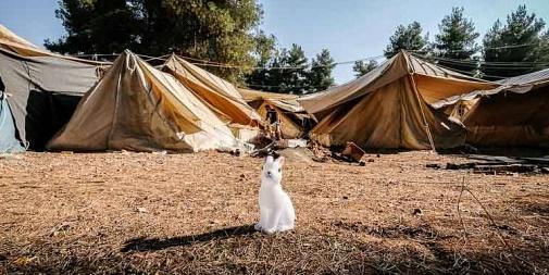 2016 Ritsona Refugee Camp