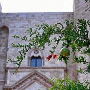 Andria - Castel del Monte | Puglia