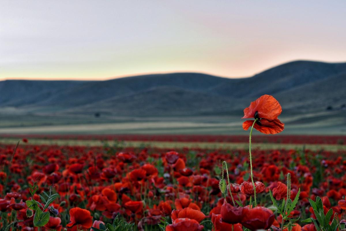 Red Carpet della Puglia | Primavera Murgiana