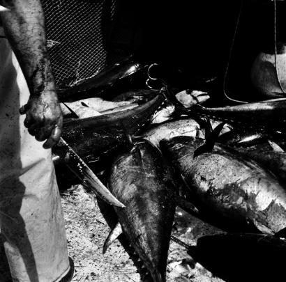 Okeanos & Hades. Chronicles from Sardinia